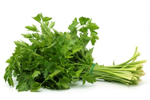 Italian Parsley「italian parsley」:スマホ壁紙(2)