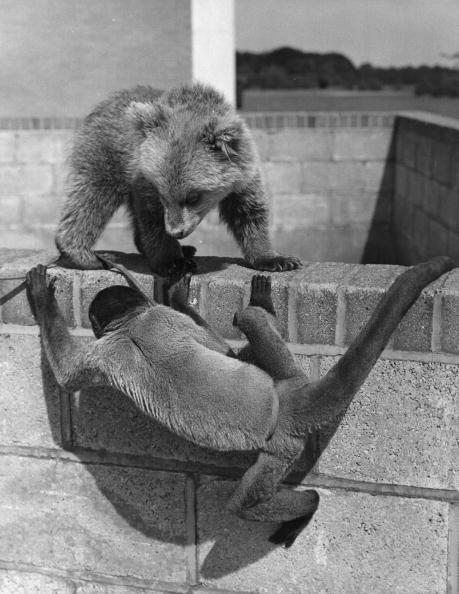 Brown Bear「Playtime At The Zoo」:写真・画像(17)[壁紙.com]