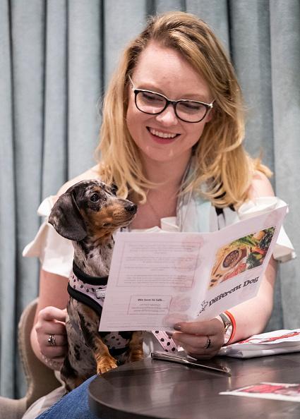 """Guest「""""A Sausage Dog Celebration"""" - London Dog Week 2019」:写真・画像(16)[壁紙.com]"""