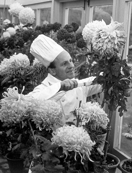 Chrysanthemum「Chrysanthemum Soup」:写真・画像(7)[壁紙.com]