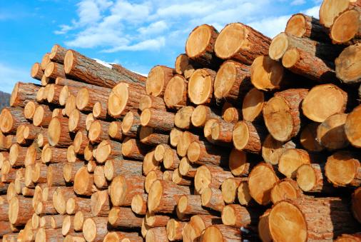 Woodpile「Stacked Logs」:スマホ壁紙(12)