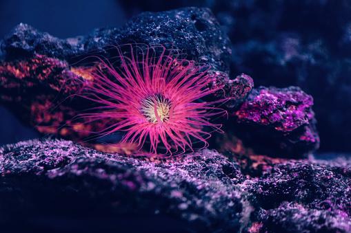 Ocean Floor「Pink starfish in aquarium」:スマホ壁紙(10)