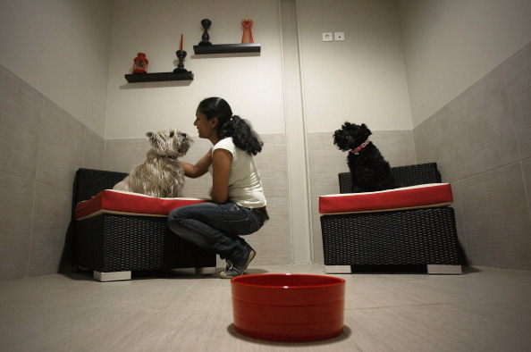 Nice - France「'Actuel Dogs' - Luxury Dogs Hotel Visit」:写真・画像(8)[壁紙.com]