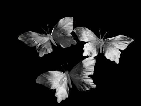 Three Animals「Butterflies」:スマホ壁紙(17)