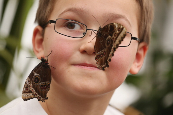6-7 Years「Butterflies Are Released Into The Natural History Museum's Sensational Butterflies Exhibition」:写真・画像(13)[壁紙.com]