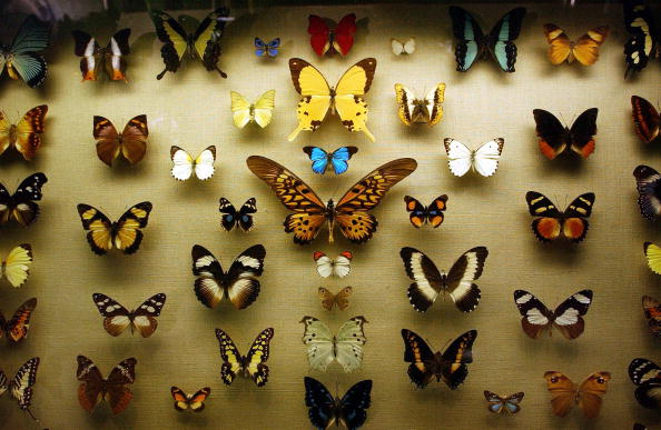 Butterfly - Insect「Butterfly Exhibit Opens in  New York」:写真・画像(1)[壁紙.com]