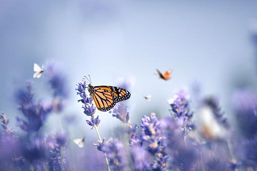 Beauty In Nature「Butterflies」:スマホ壁紙(5)