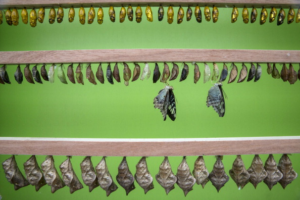 Appearance「Butterflies Are Released Into The Natural History Museum's Exhibition」:写真・画像(14)[壁紙.com]