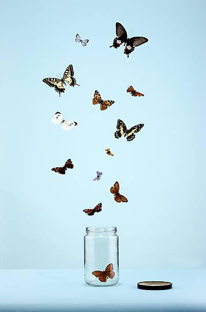 butterflies escaping from jar:スマホ壁紙(壁紙.com)
