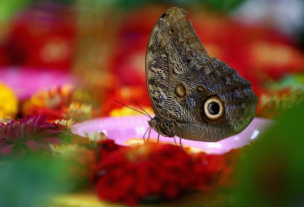 Francois Nel「General Views of Dubai Butterfly Garden」:写真・画像(19)[壁紙.com]