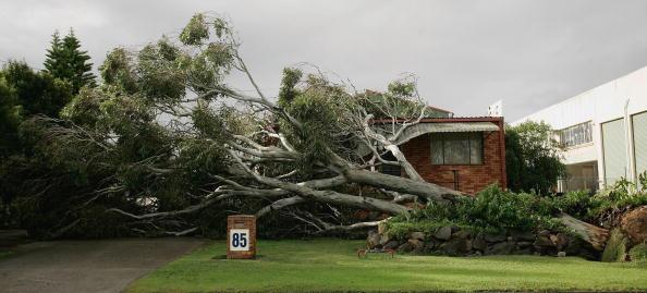 Tree「Wild Weather Wreaks Havoc On Australias Central Coast」:写真・画像(12)[壁紙.com]