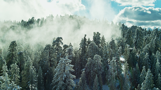 Angeles National Forest「Mist Pooling in Gap Between Trees in Snow Covered Forest - Aerial」:スマホ壁紙(3)