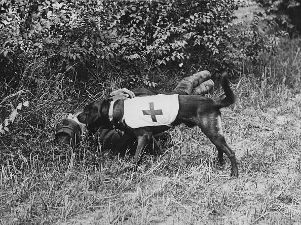 動物「Ambulance Dog」:写真・画像(16)[壁紙.com]