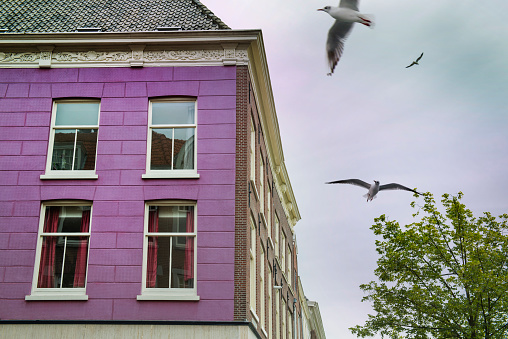 Vibrant Color「facade house, typical Dutch style in Delft, Netherlands」:スマホ壁紙(15)