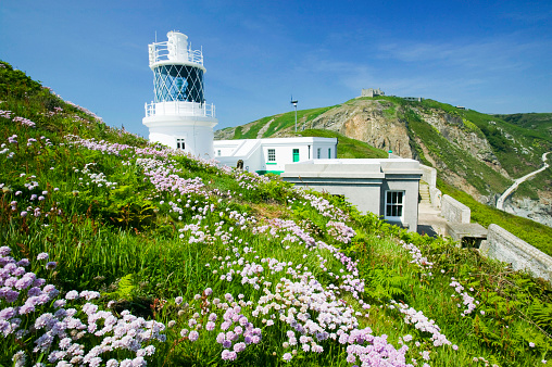 Wildflower「The new lighthouse on Lundy Island Devon UK」:スマホ壁紙(3)