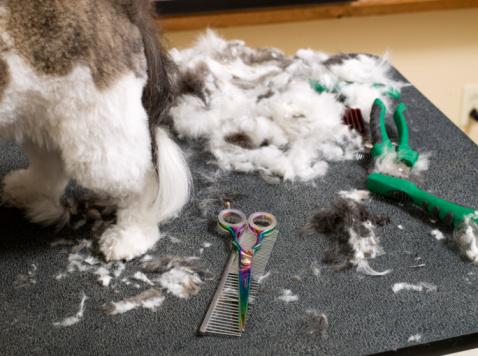 Animal Hair「Detail of dog grooming」:スマホ壁紙(3)