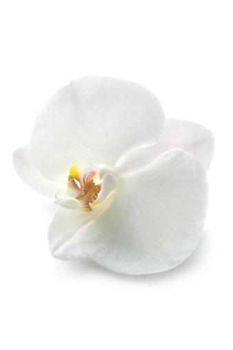 flower「花: オーキッド」:スマホ壁紙(7)