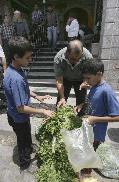 Parsley「Palestinian Children Work To Help Their Families In The Gaza Strip」:写真・画像(15)[壁紙.com]