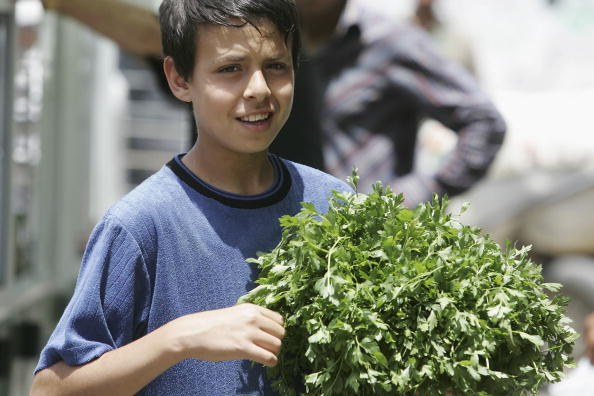 Parsley「Palestinian Children Work To Help Their Families In The Gaza Strip」:写真・画像(10)[壁紙.com]