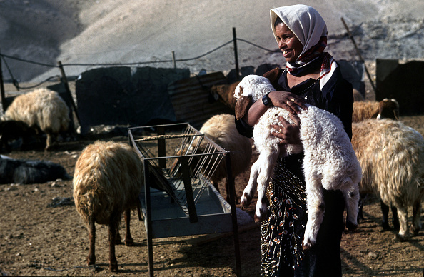 Focus On Foreground「West Bank Separation Wall」:写真・画像(15)[壁紙.com]