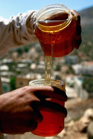 Honey「Bees Provide A Source Of Income For Unemployed Palestinian」:写真・画像(0)[壁紙.com]