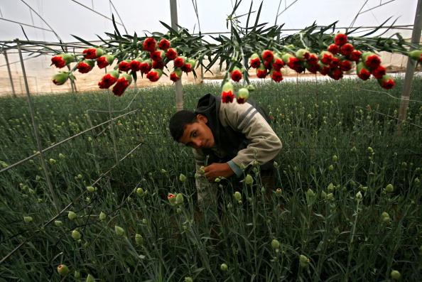 Agriculture「Local Farmers Protest Israeli Export Sanctions」:写真・画像(6)[壁紙.com]