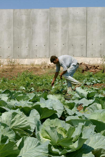 Cabbage「Israel Builds Wall Around West Bank Town  」:写真・画像(10)[壁紙.com]
