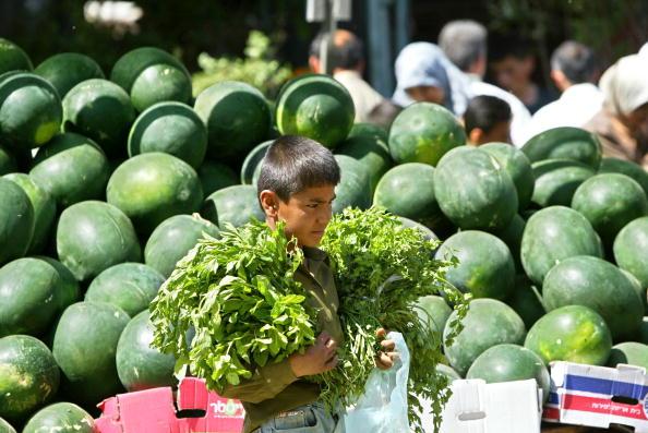 Parsley「Palestinian Children Work To Help Their Families In The Gaza Strip」:写真・画像(14)[壁紙.com]
