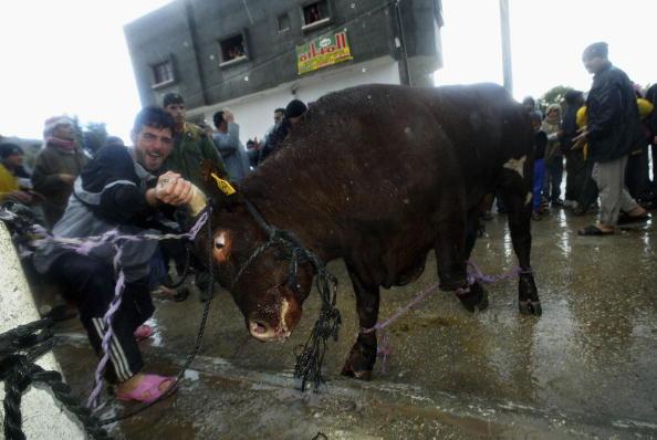 Animal Blood「Palestinians Celebrate Eid Al-Adha By Slaughtering Animals」:写真・画像(10)[壁紙.com]