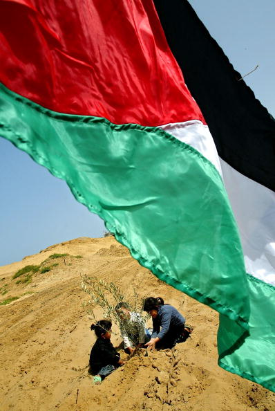 Tree「Palestinians Commemorate The 28th Anniversary Of Land Day」:写真・画像(1)[壁紙.com]