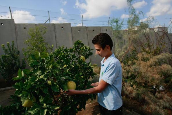 West Bank「Humanitarian Aid Groups Tackle Palestinian Water Crisis」:写真・画像(7)[壁紙.com]