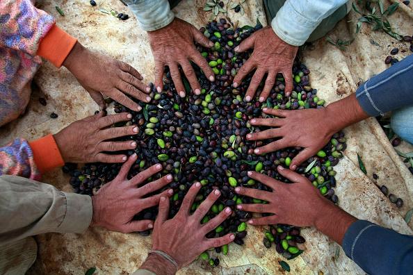 Harvesting「Humanitarian Aid Groups Tackle Palestinian Water Crisis」:写真・画像(3)[壁紙.com]