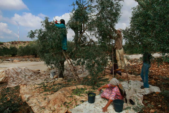 West Bank「Humanitarian Aid Groups Tackle Palestinian Water Crisis」:写真・画像(12)[壁紙.com]