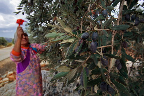 West Bank「Humanitarian Aid Groups Tackle Palestinian Water Crisis」:写真・画像(10)[壁紙.com]