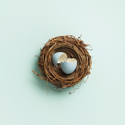 Animal Nest「Broken egg inside nest」:スマホ壁紙(6)