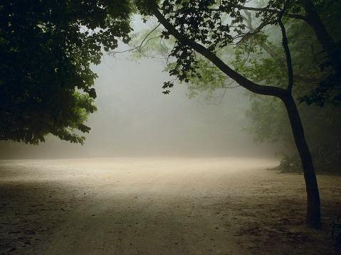 Horror「Misty Forest」:スマホ壁紙(13)