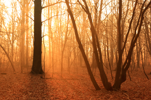 Grove「Misty Forest」:スマホ壁紙(0)
