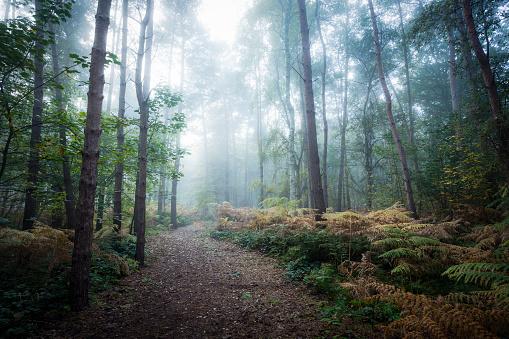 Spooky「Misty forest walk」:スマホ壁紙(6)