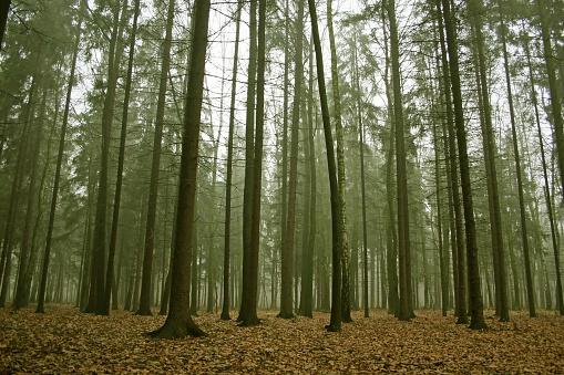 質感「Misty forest」:スマホ壁紙(18)