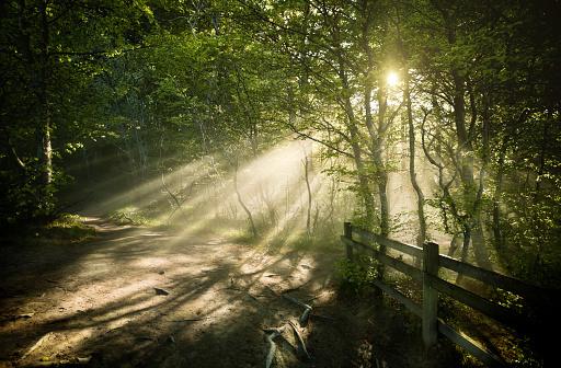 Spirituality「Misty forest」:スマホ壁紙(7)