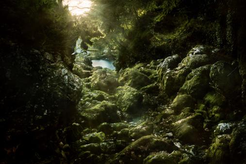 Aura「Misty forest」:スマホ壁紙(10)