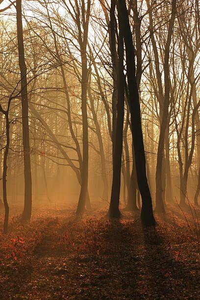 Misty Forest:スマホ壁紙(壁紙.com)