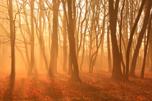 Solitude「Misty Forest」:スマホ壁紙(8)