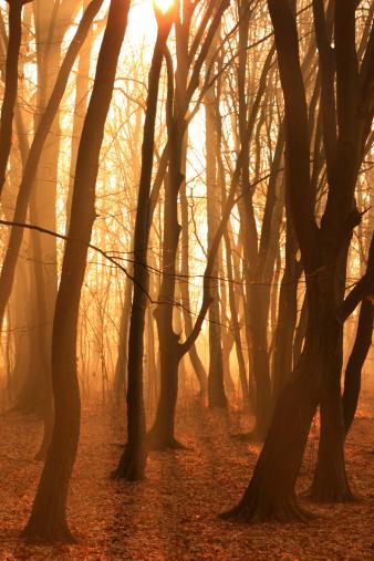 Grove「Misty Forest」:スマホ壁紙(3)