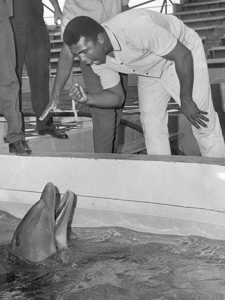 Photoshot「Cassius Clay」:写真・画像(13)[壁紙.com]
