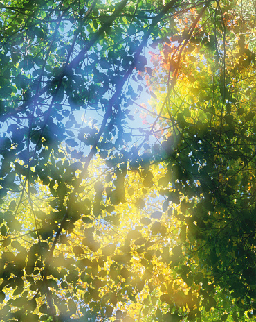 Multiple Exposure「Sunlight shining through vine maple and alder tree leaves」:スマホ壁紙(9)
