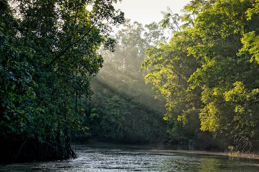 Amazon River「Sunlight shining through trees on river in Amazon rainforest」:スマホ壁紙(1)