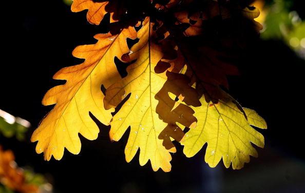 秋「Autumn Scenes Over Primrose Hill」:写真・画像(7)[壁紙.com]