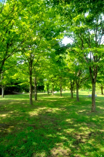Green Color「Park Filled With Lush Green Trees. Osaka Prefecture, Japan」:スマホ壁紙(13)