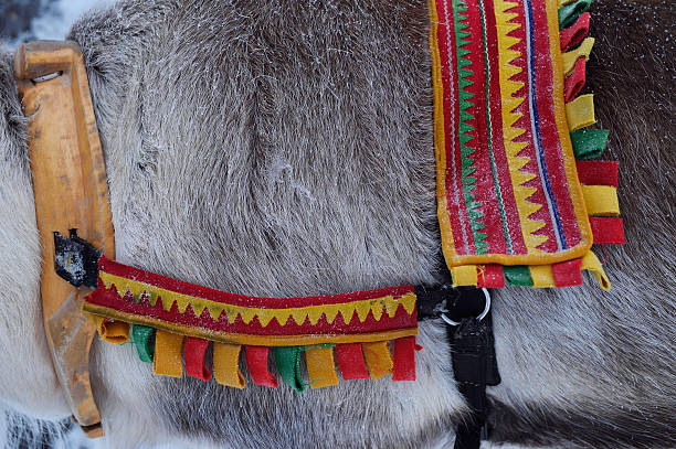 Reindeer sledding, Swedish Lapland:スマホ壁紙(壁紙.com)